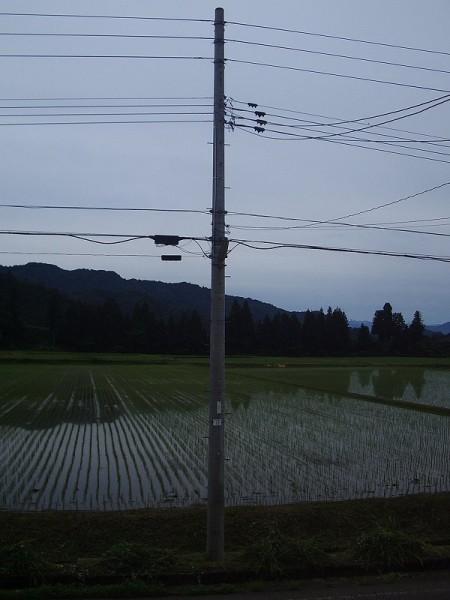 朝早くから田んぼの畦の草刈りをしている人がいました