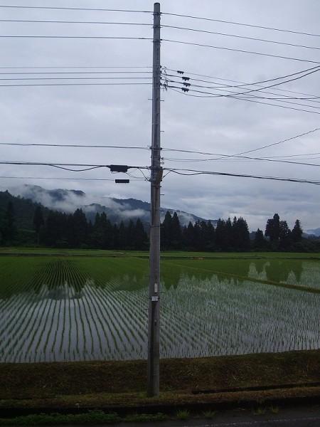 雨上がりの涼しい朝です