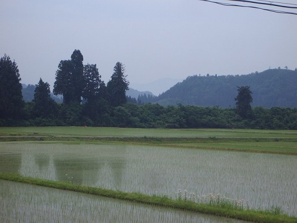 新潟県南魚沼市はくもりでむし暑く感じます