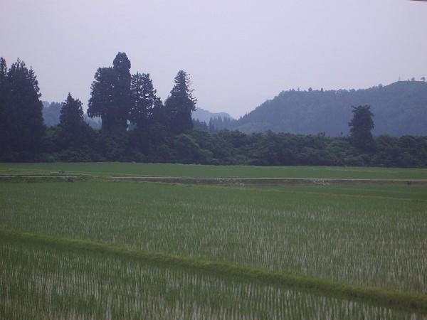 新潟県南魚沼市はくもりでちょっと蒸し暑いです
