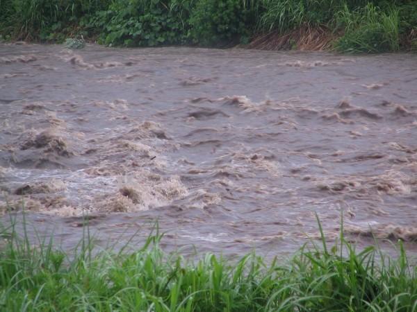 水無川は激しい濁流になっています