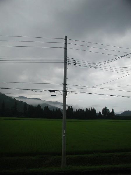 雨上がりで空気がジメジメしています