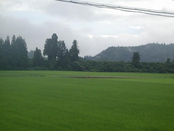 魚沼産コシヒカリの田んぼは梅雨時のような天気です