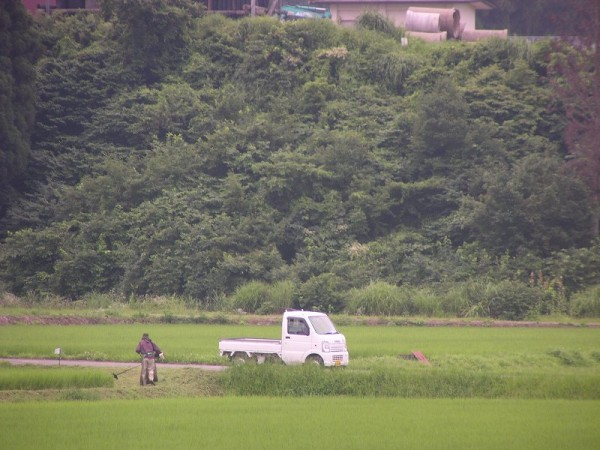 田んぼの畦の草刈りをしている人がいます