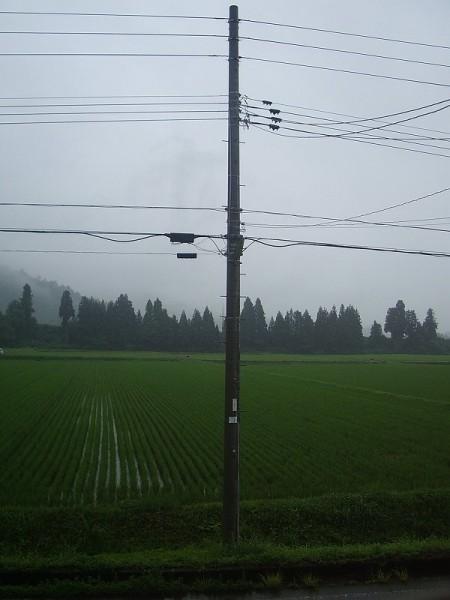 いよいよ梅雨本番という雨降りになりました