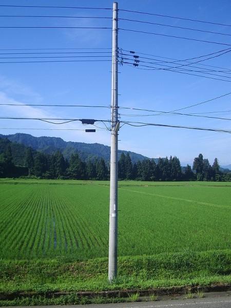 気持ちのいい青空・・・爽やかな涼しい朝です