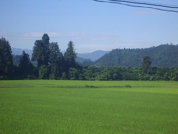 今日も朝から暑いです@新潟県南魚沼市