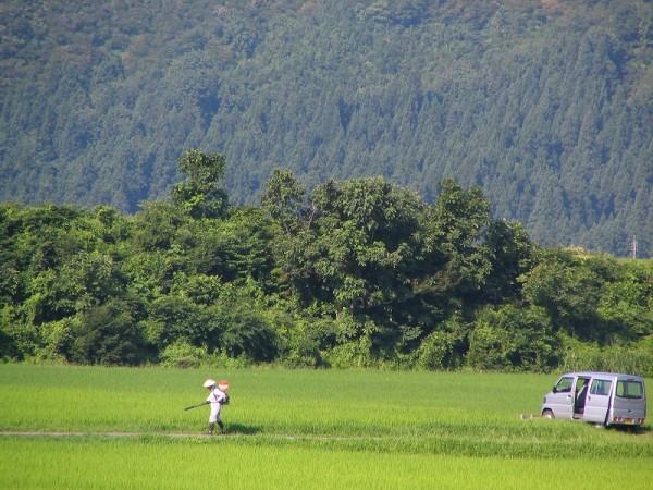 暑い中、田んぼで作業している人がいます