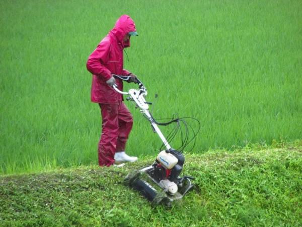 雨の中で田んぼの畦の草刈りをしている人がいます