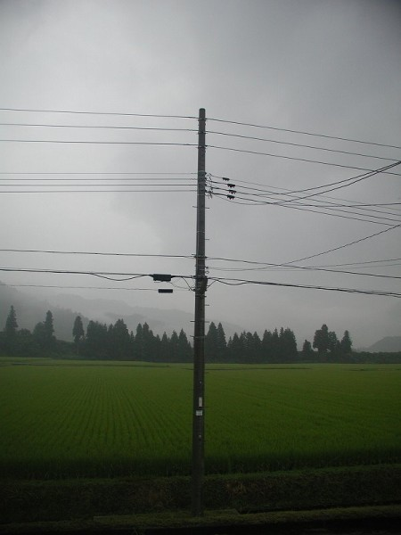 今朝は雨降りで雷の音が聞こえます