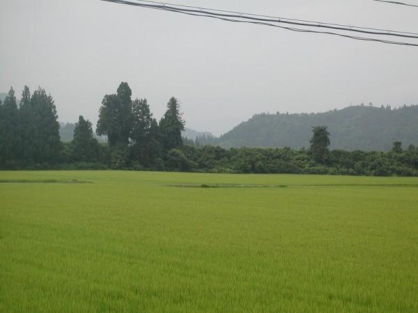猛暑がようやく過ぎたようです@魚沼産コシヒカリの田んぼ