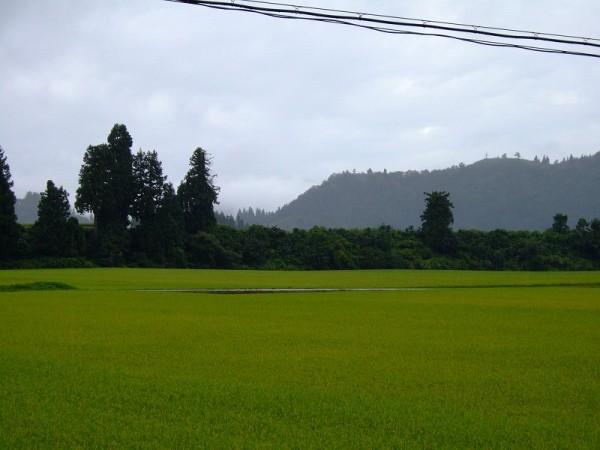 魚沼は今日も朝から雨降りです