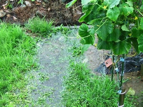 菜園のまわりは大きな水たまりになりました