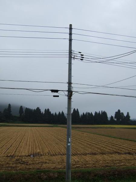 田んぼの向こうが霧で覆われています