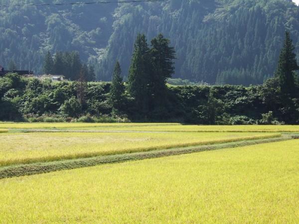 青空が広がって絶好の農作業日和です