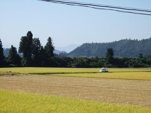 稲刈り作業が行われている魚沼産コシヒカリの田んぼ