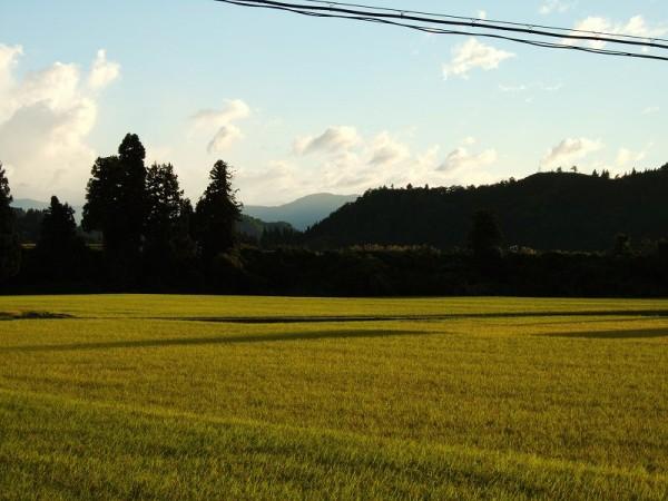 久しぶりに青空が広がって、まぶしい夕日が見えています