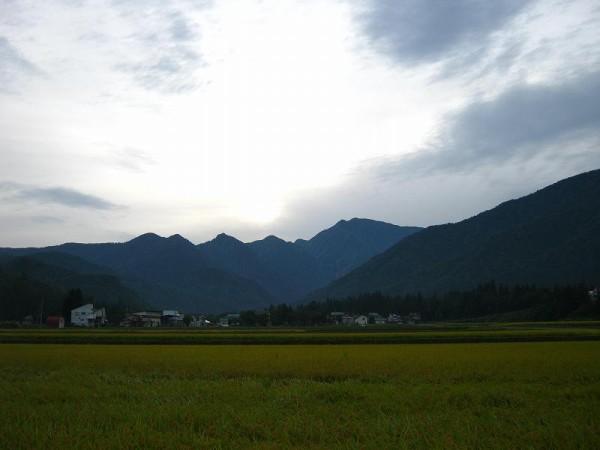 今朝の田んぼの風景