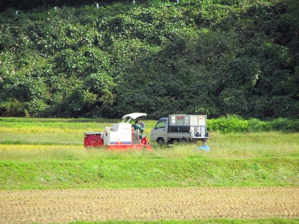 もうそろそろ稲刈り時期は終わります