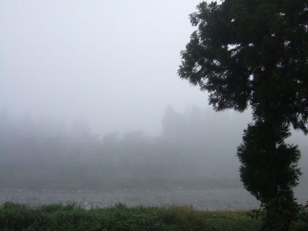 今朝は霧に覆われて視界が悪いです