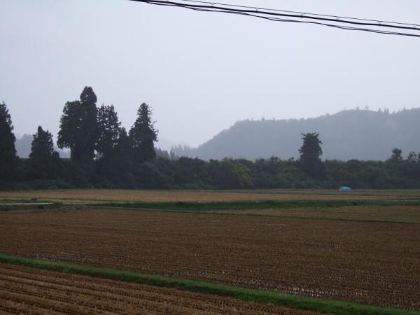 今朝の魚沼産コシヒカリの田んぼは雨降りです