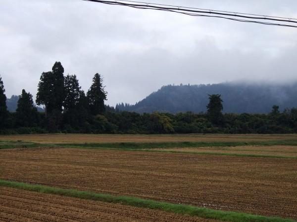 魚沼産コシヒカリの田んぼは雨上がりで気温が低いです