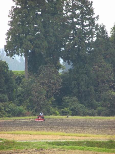 来年の稲作に向けてのトラクター作業