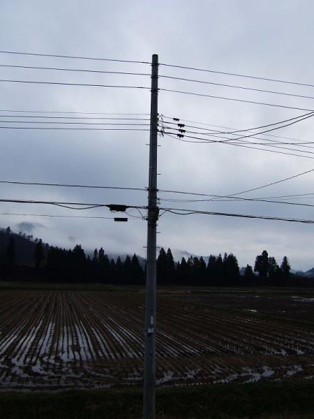 今日も冷たい雨降り・・・冬はすぐそこです