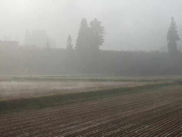 魚沼産コシヒカリの田んぼを覆っていた霧が晴れてきました