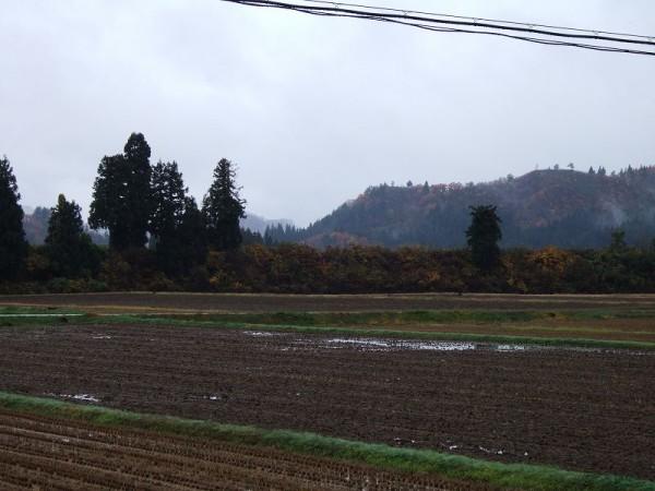 魚沼産コシヒカリの田んぼは今日も雨です