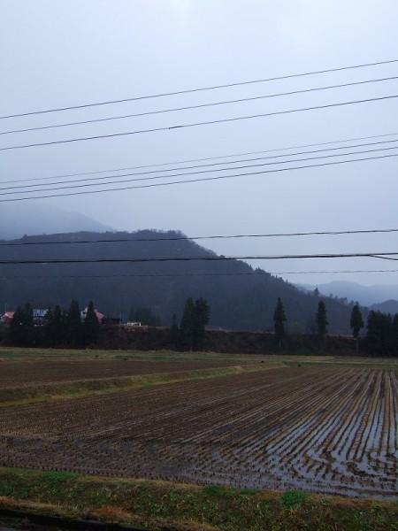 魚沼産コシヒカリの田んぼに冷たい雨が降っています