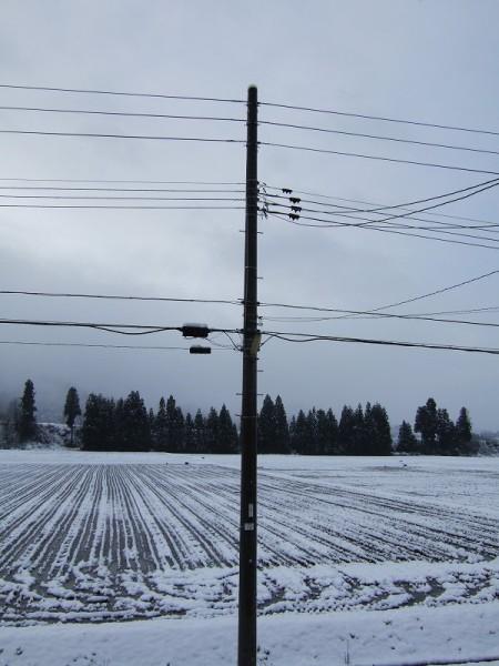 昨晩から雪が10cmくらい降りました