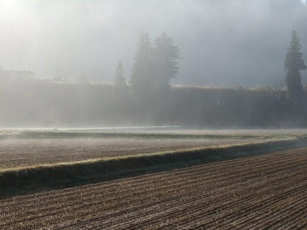 田んぼを覆っていた霧が晴れて青空が見えてきました