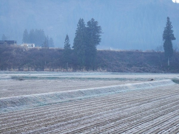 霜が降りて田んぼの水が凍っています