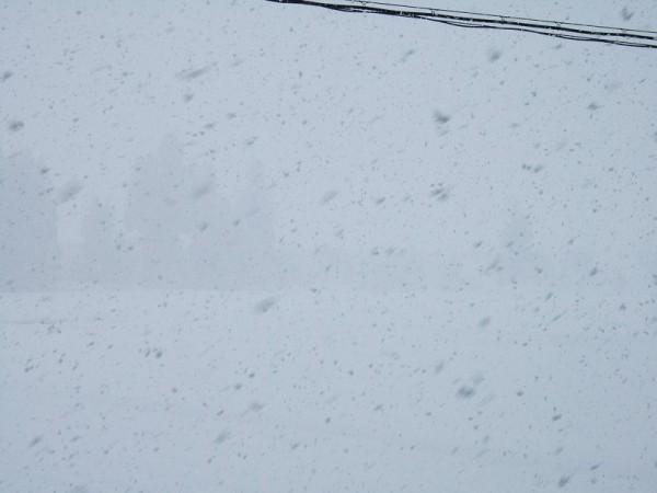 午後になって雪が激しくなってきました