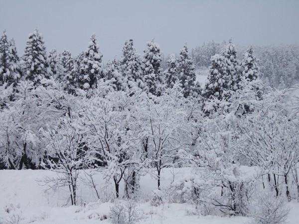 新潟県南魚沼市は真っ白な冬景色になりました