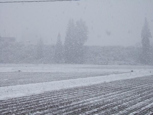 だんだん田んぼが白くなってきました
