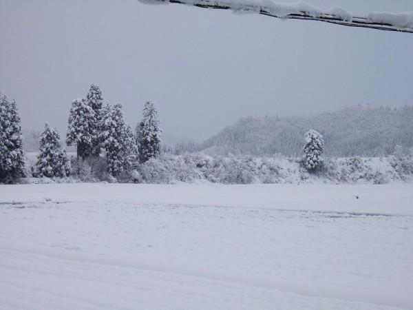 魚沼産コシヒカリの田んぼは真っ白な冬景色になりました