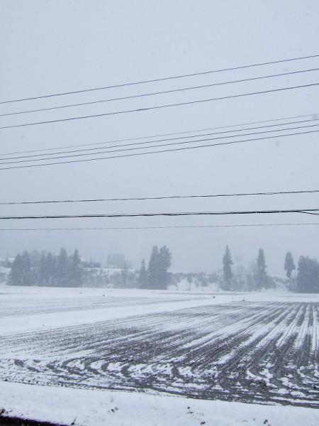 久しぶりの冬らしい降り方・・・どんどん積もってほしいものです