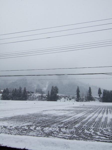 雪が降っていますが、積もりそうではありません