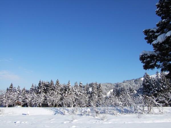 青空が広がり、陽ざしが雪面に当たってまぶしいです