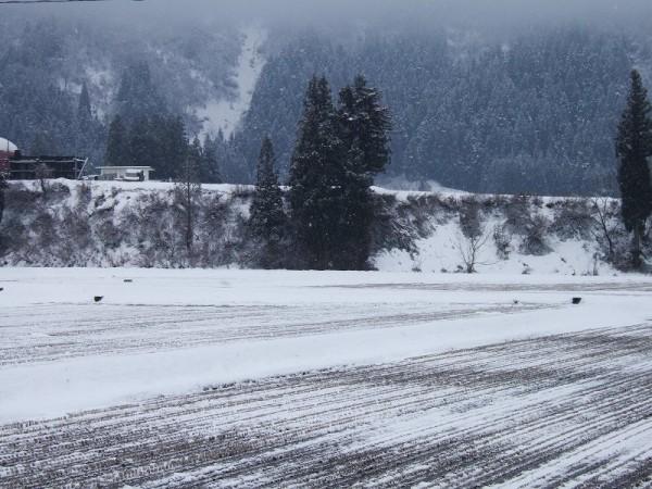1月中旬なのに田んぼの土が見えているなんて・・・