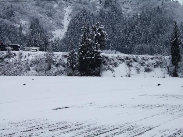 昨晩から今朝にかけて数cmの雪が積もりました
