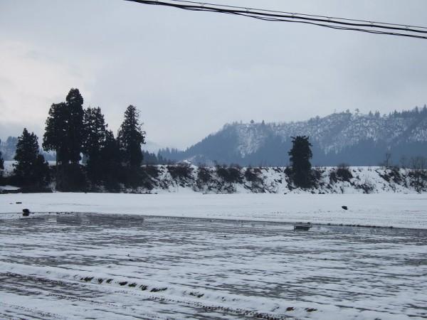 弱い雨降り・・・田んぼの雪はどんどん消えています