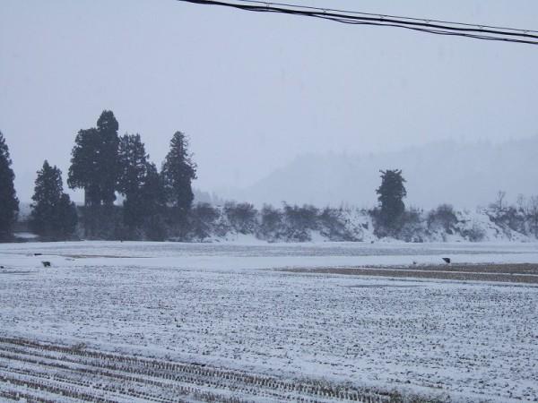 期待外れ・・・雪はほとんど積もりませんでした