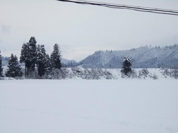 真っ白な雪景色
