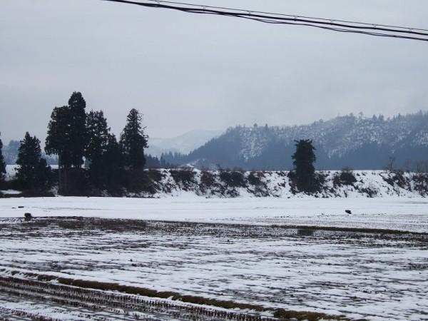 魚沼産コシヒカリの田んぼでは年明けに雪が降っていません