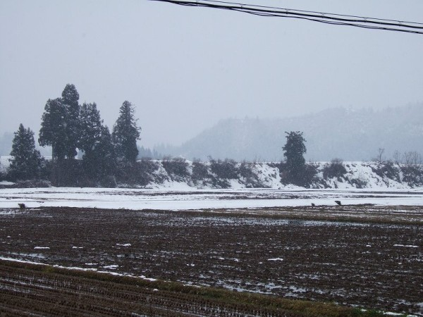 気温が低く弱い雪が降っています