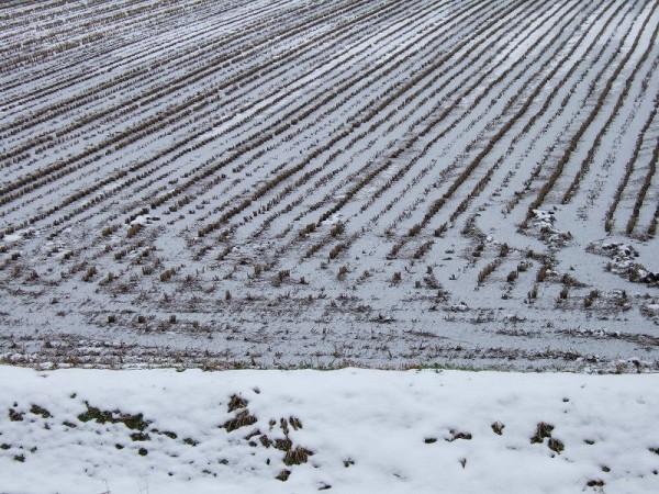 冷え込んでいて、田んぼの水が凍っています