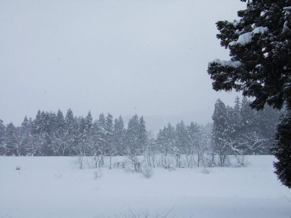 冬らしい厳しい寒さです